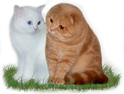 Питомник кошек Солнечный Город